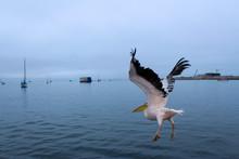 Pelikan Hebt Ab