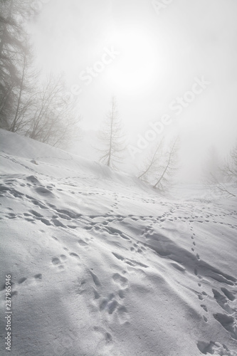 Photographie  Snowy forest in the mist at the ski resort of La Plagne, Savoie, French Alps