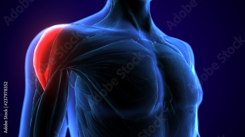 Fotografía 3d rendered, medically accurate illustration of the deltoid