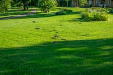 Molehills On The Grass