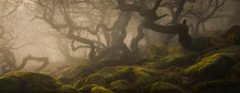 Ancient Woodland In The Peak D...