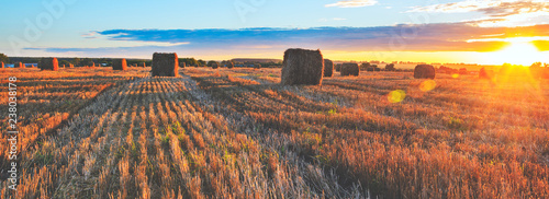 Photo sur Toile Cappuccino Panoramic view of hay bales on the field after harvesting illuminated by the last rays of setting sun
