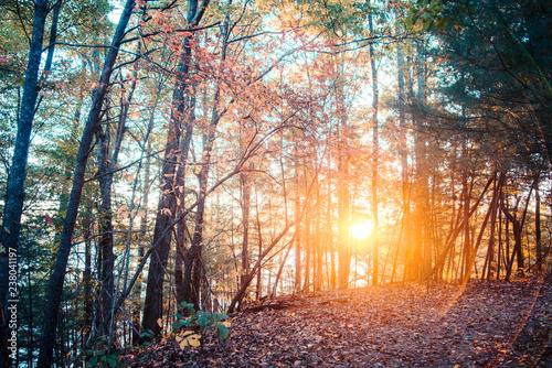 Nature Trail in North Carolina in Autumn.