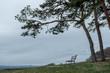 Windgepeitschte Kiefer mit Ruhebank vor Sturmwolken auf der schwäbischen Alb
