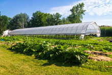 Agriculture Greenhouse And Gar...