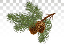 Christmas  Pine Tree Branches And Cones. Design Element In Realistic Style For Christmas Decoration. Vector Illustration. Eps 10.
