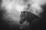 Cheval noir - 238066945