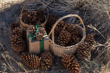 Rustic Christmas Pine Cones Decorate Brown Paper Wrapped Gift Box With Vintage Green Ribbon