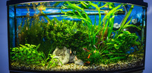 Close Up Of Aquarium Tank Full...