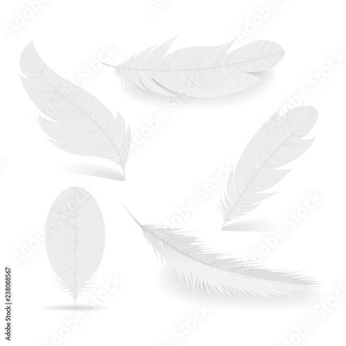 Fotografie, Obraz  White feathers collection