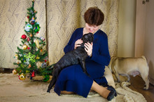 Cheerful Lady Embraces, Hug Black, Active French Bulldog. Happy Woman Looks To The Camera. Smile Dog-owner Near Christmas Tree. Dogman, Dog Lover Sit With Pet At New Year Holidays