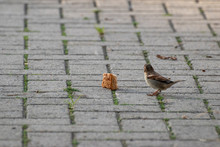 Sparrows And A Piece Of Bread