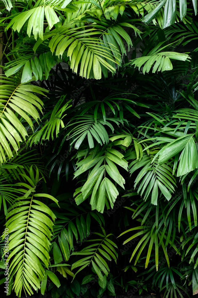 Fototapeta Tropical jungle nature green palm leaves on dark background in a garden