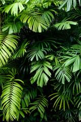 Tropikalna dżungla natura zielone palmy pozostawia na ciemnym tle w ogrodzie