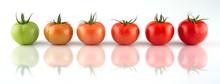 Evolution Of Red Tomato Isolat...