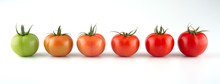 Evolution Of Red Tomato Isolat...