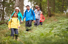 Multi Generation Family Walking In Line Downhill On A Trail In A Forest During A Camping Holiday, Lake District, UK