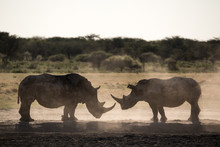 Two Rhino Silhouettes At Khama Rhino Sanctuary In Botswana