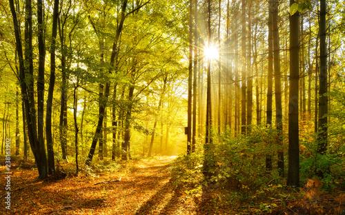 Fototapeten Wald Forest in Autumn, warm light of the rising sun breaking through morning fog
