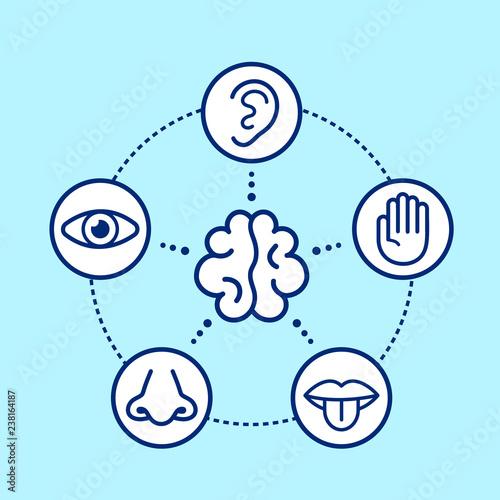 Leinwand Poster Five human senses surrounding brain.
