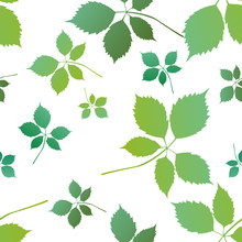 Green Maple Ash Leaf, Acer Negundo Leaf Background, Pattern. Vector Illustration.