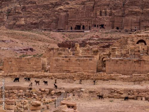 Goats in front of a cliff face with caves carved from the face, Petra Jordan