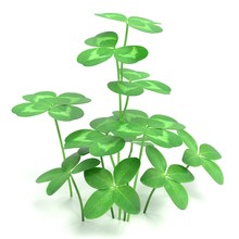 Realistic 3D Render Of Clover Plant