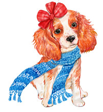 Spaniel Dog In Winter Scarf Wi...