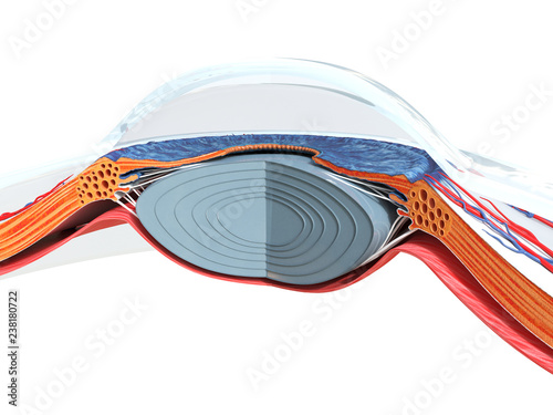 Fotografia, Obraz  3d rendered medically accurate illustration of the eye anatomy