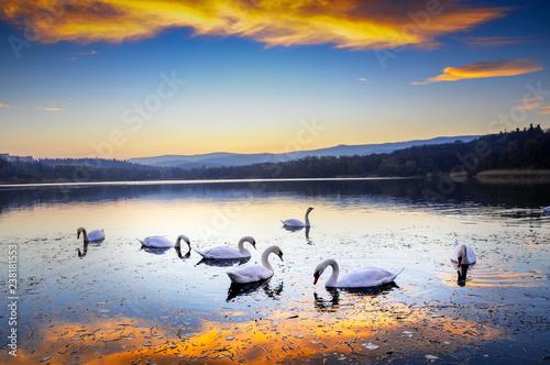 Fototapeta premium Białe łabędzie na kolorowym jeziorze