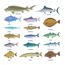 Fish Set. Collection Of The Aquatic Fauna
