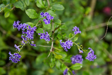 Small Purple Flowers With Bright Green Leaves