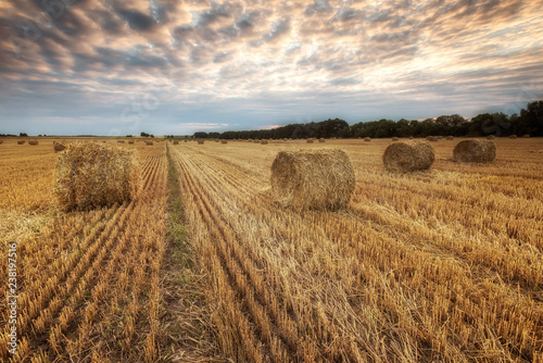 Summer field / Landscape with a field full of hay bales before sunset Canvas-taulu