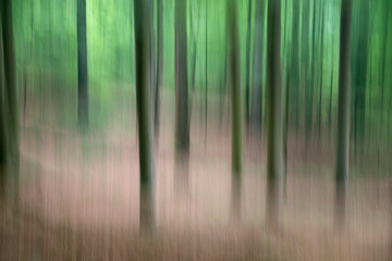 Moving trees in the forest