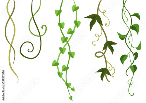 Photo Twisted wild lianas branches set.