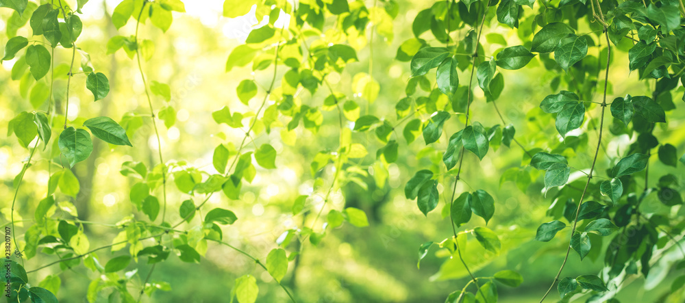 Blurred of leaf bokeh in garden morning background,spring summer season or green concept