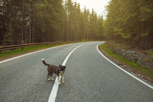 Dog In The Middle Of The Road,...