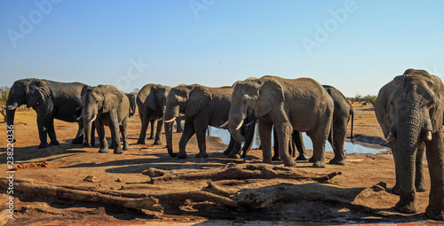 Fotografía  Landscape view of a herd of elephants standing with the camp waterhole in the background against a pale blue clear sky