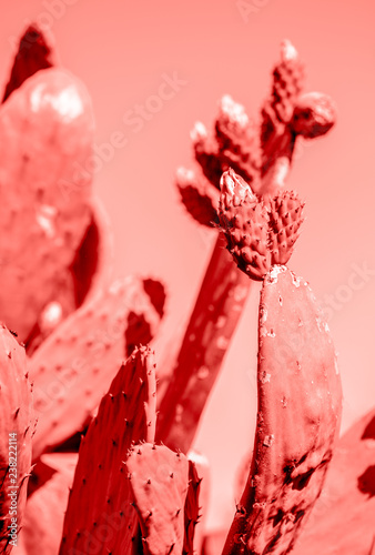 living-coral-2019-background-with-cactus-living-coral-color-of-the-year-2019