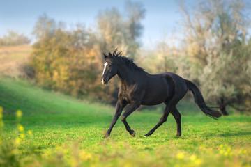 Horse run gallop in green meadow