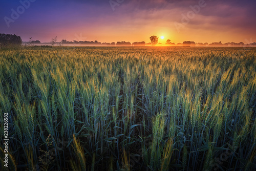Foto auf AluDibond Khaki Sonnenaufgang im Juni über einem Feld bei Hannover