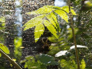 Multi-color spiderweb lit by the sun in the dark forest