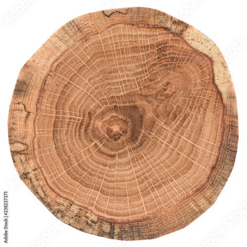Photo  Piece of circular wood cross section with tree growth rings