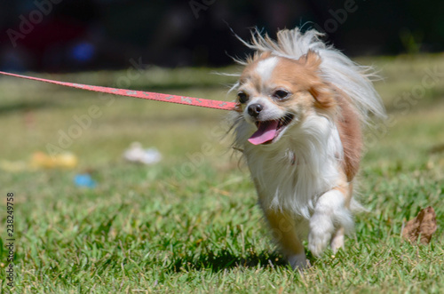 Foto  cachorro dog pet