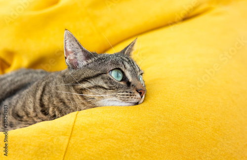 Foto auf Gartenposter Katze Cute tabby cat with green eyes lies on bright yellow bean bag. Boring mood.