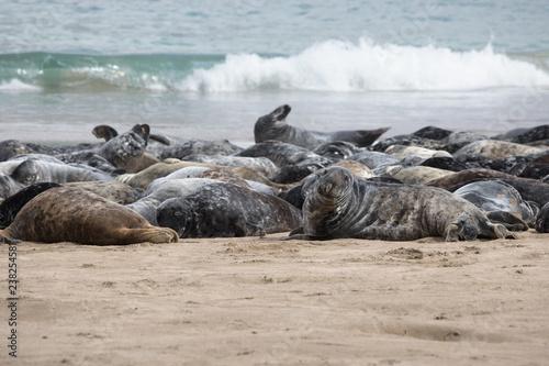 Photo  Seals on a beach