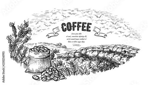 Cuadros en Lienzo coffee plantation landscape bag and bush in graphic style hand-drawn vector illustration