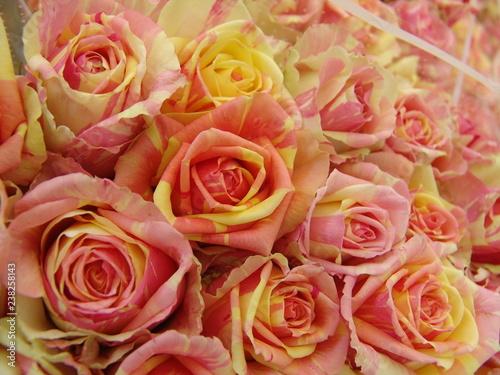 Fiori Gialli Rose.Rose Da Fiore Reciso Rosa E Giallo Buy This Stock Photo And