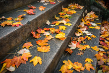 Fallen Leaves At Grace Court