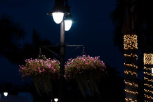 Illuminated Christmas Lights W...